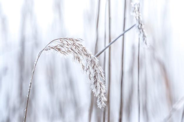 Очаровательные замороженные растения на размытом фоне