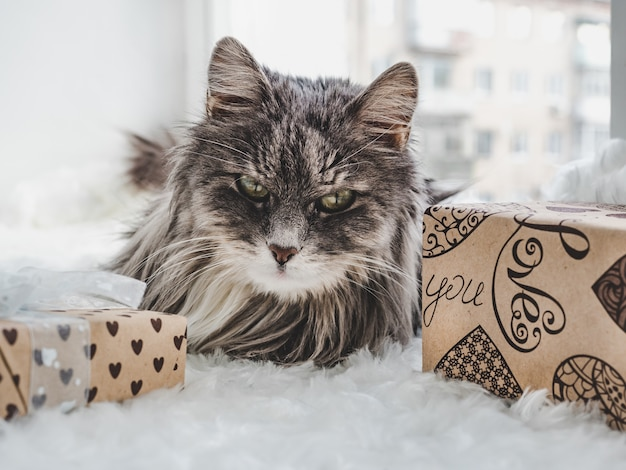 Charming, furry kitten and boxes with gifts