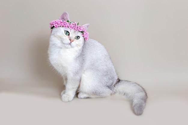 ピンクの花の冠の魅力的な灰色の猫は灰色の背景に座っています。コピースペース