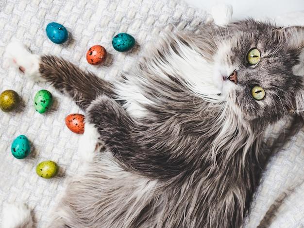 白い背景に明るい色で描かれた魅力的な子猫とイースターエッグ。上面図、クローズアップ。イースター、おめでとう。休日の準備