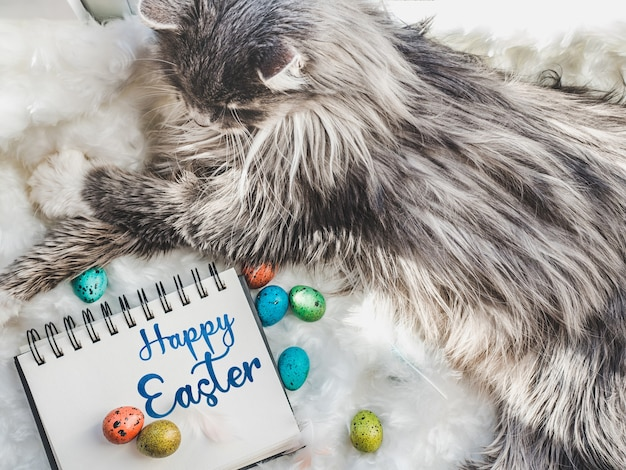 Charming kitten and easter eggs painted in bright colors on a white background. top view, close-up. happy easter. preparing for the holiday