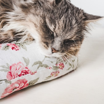 Charming kitty, lying on a white pillow