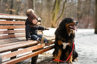 Charming little boy sits on the bench with a Bernese Mountain Dog