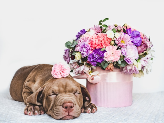 Charming puppy and a bouquet of fresh flowers