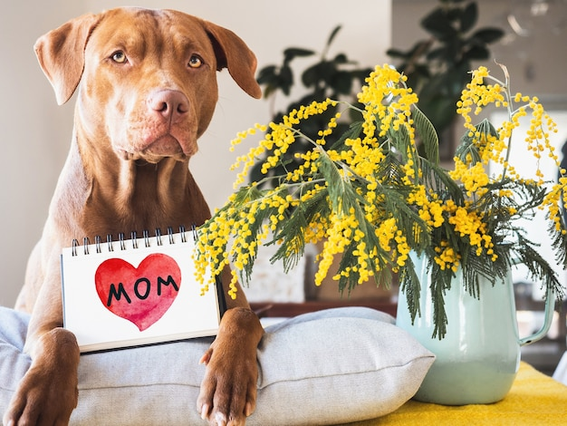 Charming puppy of brown color and bright flowers.