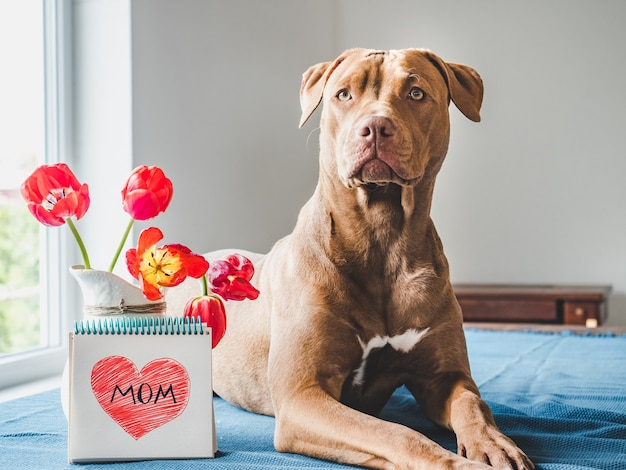 Charming puppy of brown color and bright tulips.