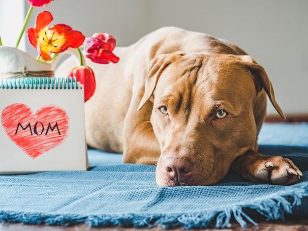 갈색과 밝은 튤립의 매력적인 강아지
