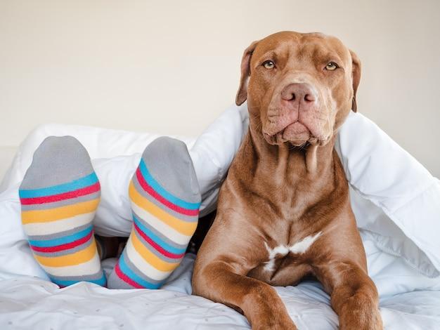 갈색 색상의 매력적인 강아지. 클로즈업, 야외. 일광. 돌봄, 교육, 복종 훈련, 애완 동물 기르기의 개념