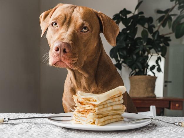 갈색의 매력적인 강아지.