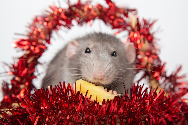 Charming rat dumbo in a basket with christmas decorations