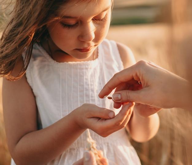 Очаровательная маленькая девочка берет семена пшеницы от своей матери, позирует в поле