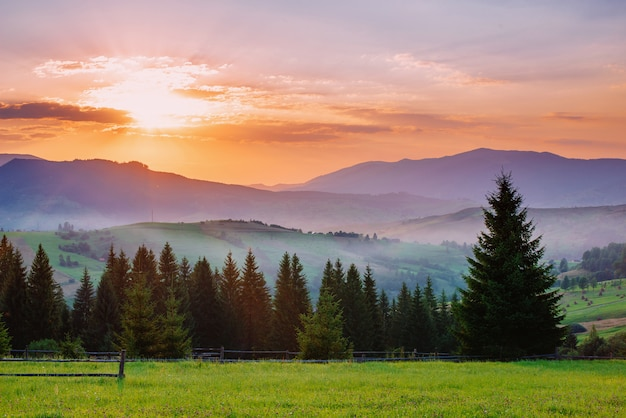 Charming summer sunset