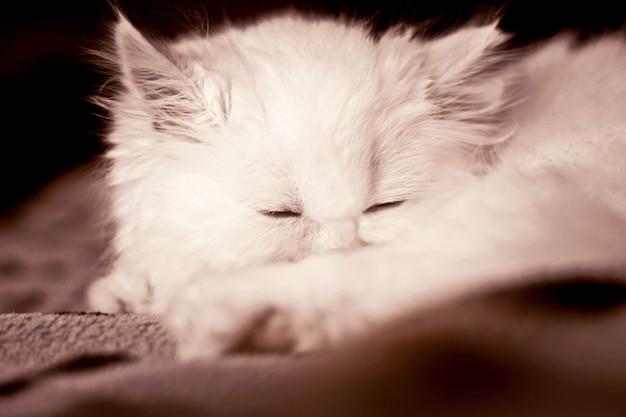 Charming white fluffy cat