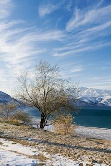 ウズベキスタンの冬のチャルヴァク貯水池と孤独な木。美しい冬の風景。