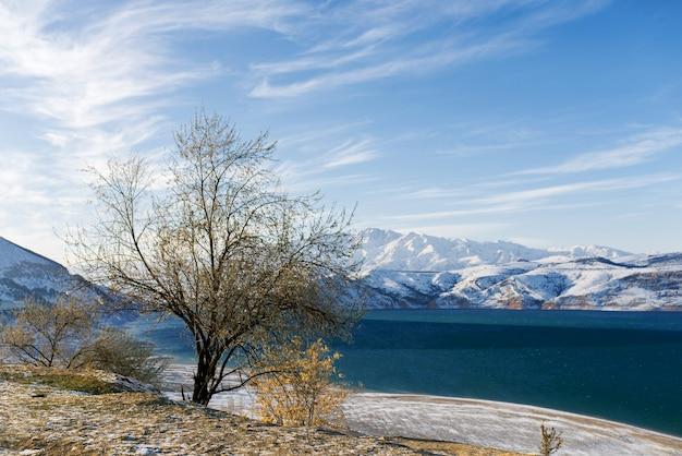 ウズベキスタンの冬のチャルヴァク貯水池と孤独な木