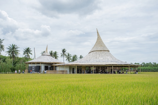 Кофейное кафе chata thammachart на рисовом поле