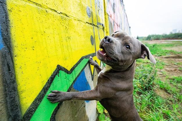 Cheerful active dog at graffiti wall in street