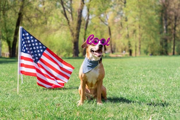 Веселый и счастливый стаффордширский терьер в «классных» маскарадных очках сидит у газона перед флагом сша в парке