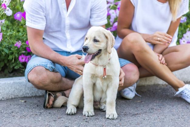 공원에서 그의 개를 노는 명랑 커플. 강아지 리트리버와 함께 신선한 공기 속에서 여름 산책. 남자와 여자는 그의 래브라도 강아지를 매우 좋아합니다.