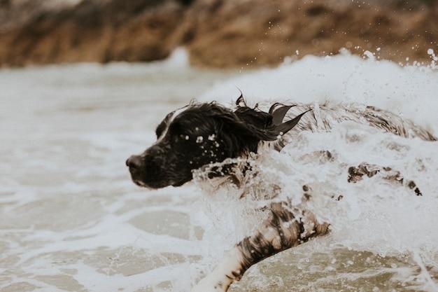 Cheerful dog enjoying the sea