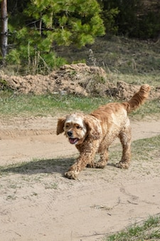 元気な犬が森林伐採の中を歩く