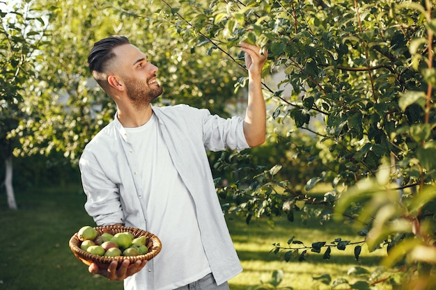 Cheerful farmer with organic apples in garden. green fruits in wicker basket.