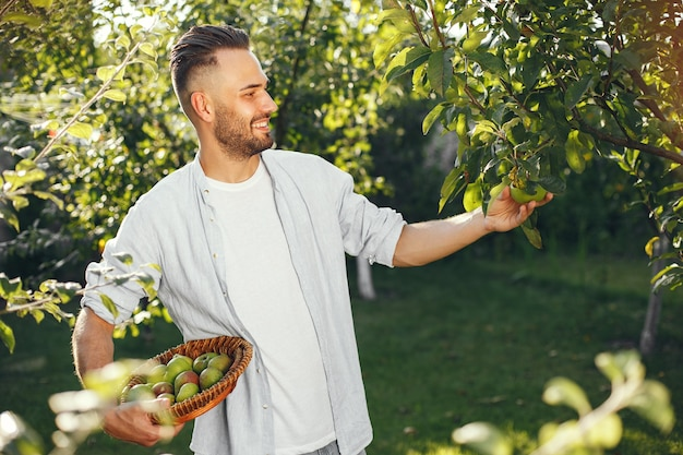 Веселый фермер с органическими яблоками в саду. зеленые фрукты в плетеной корзине.