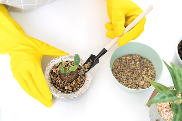 部屋に小さな観葉植物を植えている陽気な幸せなアジアの女性がクローズアップ、水スプレーを使用して植物に優しく水をまきます。アジアの幸せな女の子は、サボテンと観葉植物を植えて水をまくのを楽しんでいます。