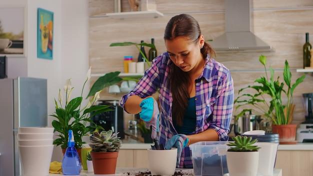 テーブルの上の台所に座っているhouseflowersの世話をする陽気な女性。花屋は、シャベル、手袋、肥沃な土壌、家の装飾用の花を使用して、白いセラミックポットに花を植え替えます。