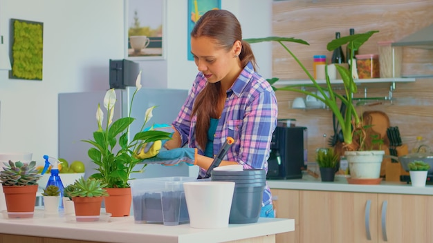 Cheerful woman taking care of the flowers at home in cozy kitchen. using fertil soil with shovel into pot, white ceramic flowerpot and plants prepared for replanting for house decoration caring them