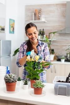 居心地の良いキッチンで自宅で花の世話をする陽気な女性。シャベルで肥沃な土壌をポットに使用し、白いセラミック植木鉢とそれらを世話する家の装飾のために植え替えるために準備された植物
