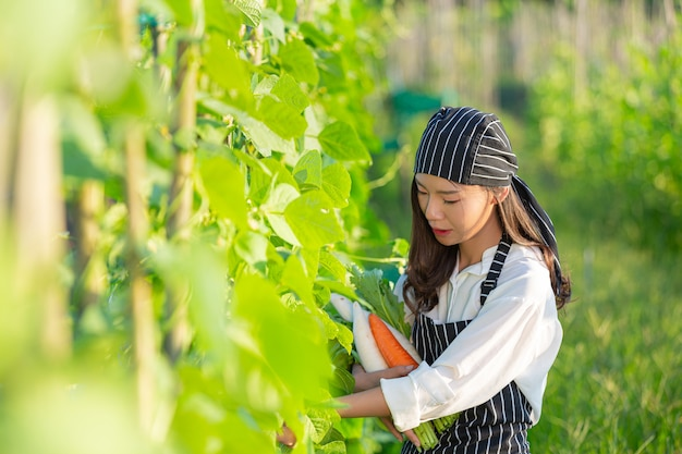有機農場から新鮮な農産物を収穫するシェフ