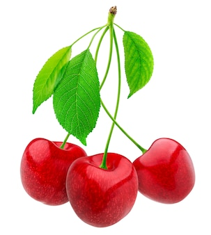 Cherries collection. cherry isolated on white