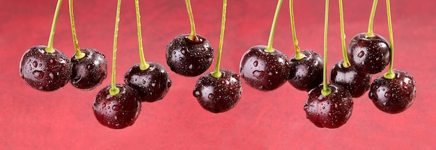 Cherry banner background of ripe cherry berries with drops of freshness