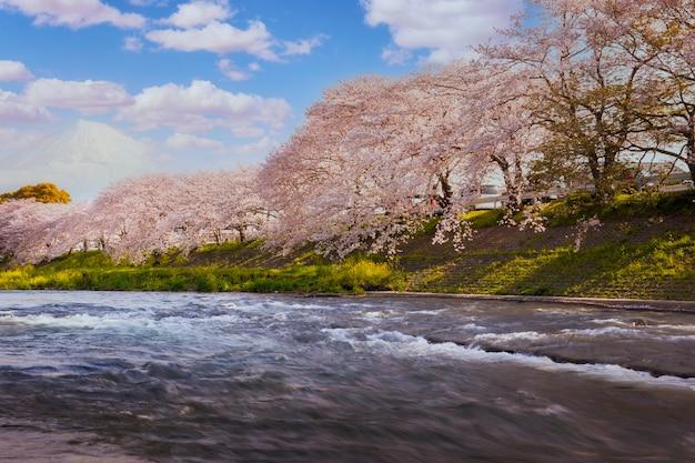 Цветущая вишня / мартовский пейзаж в японии. цветет закура на горе фудзи, япония