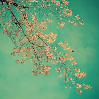 Вишневый цвет и голубое небо с урожайными тонами.