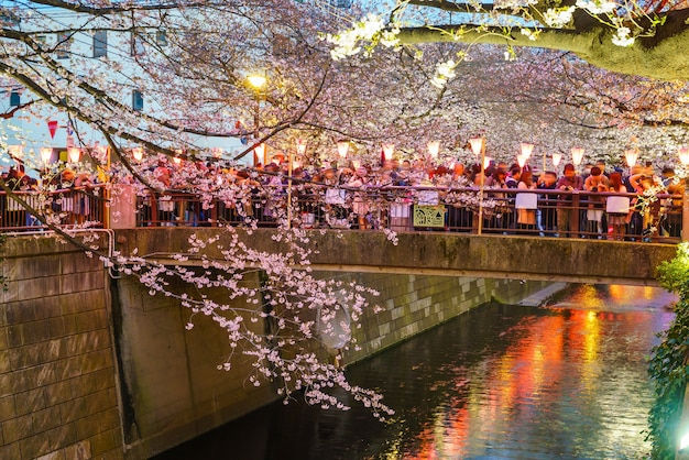 東京、日本の夕暮れの目黒運河の桜
