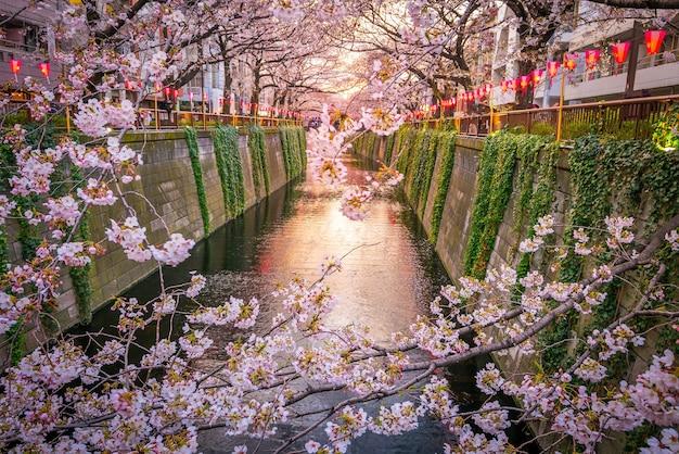 夜の東京の目黒運河の桜