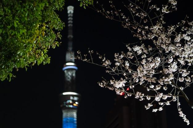 Вишневый цвет ночью в токио, япония