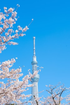 Cherry blossom branches against tokyo tower on blue sky