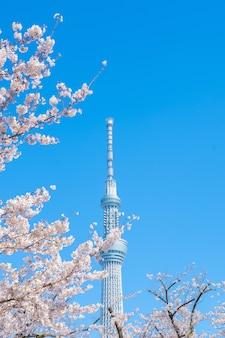 푸른 하늘에 도쿄 타워에 대 한 벚꽃 가지