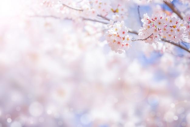 Цветок вишневого цвета весной для предпосылки или космос экземпляра для текста