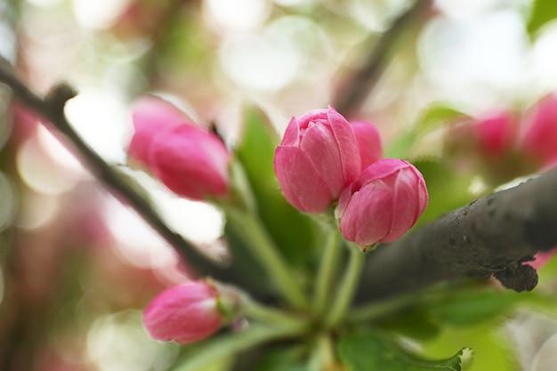 春の桜の花