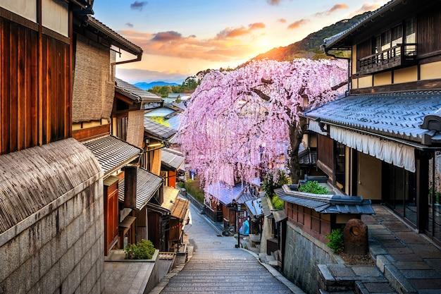 일본 교토의 역사적인 히가시야마 지구에서 봄의 벚꽃.