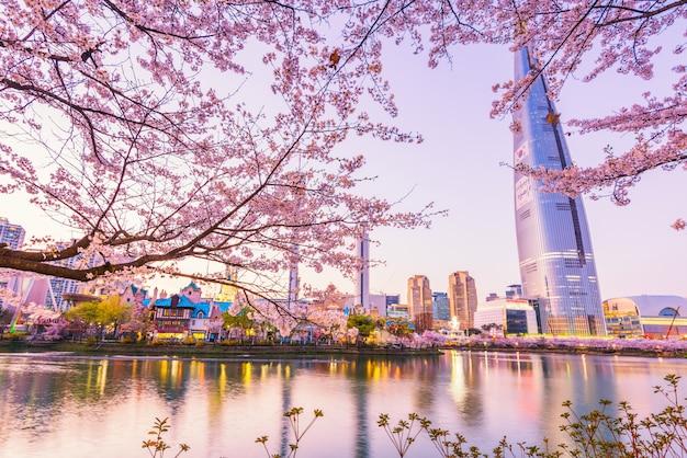 서울, 한국에서 봄의 벚꽃.