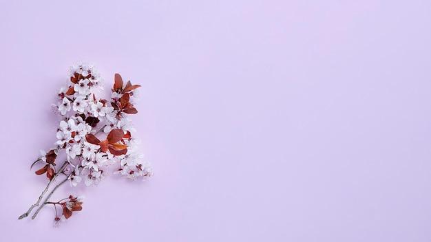 Вишневый цвет на сиреневом фоне веб-баннера
