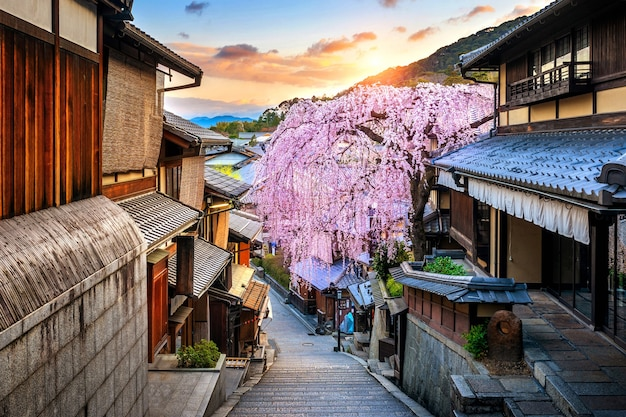 Cherry blossom in springtime at the historic higashiyama district, kyoto in japan.