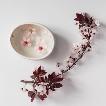 白い壁に水ボウルと桜の小枝。フラットレイ。