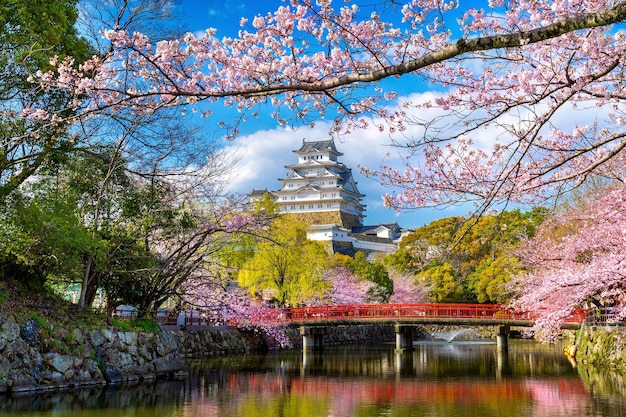 Вишневый цвет и замок в химедзи, япония.