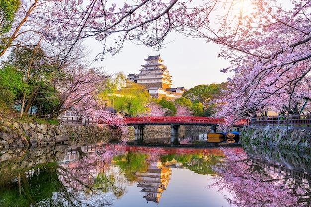 일본 히메지의 벚꽃과 성.